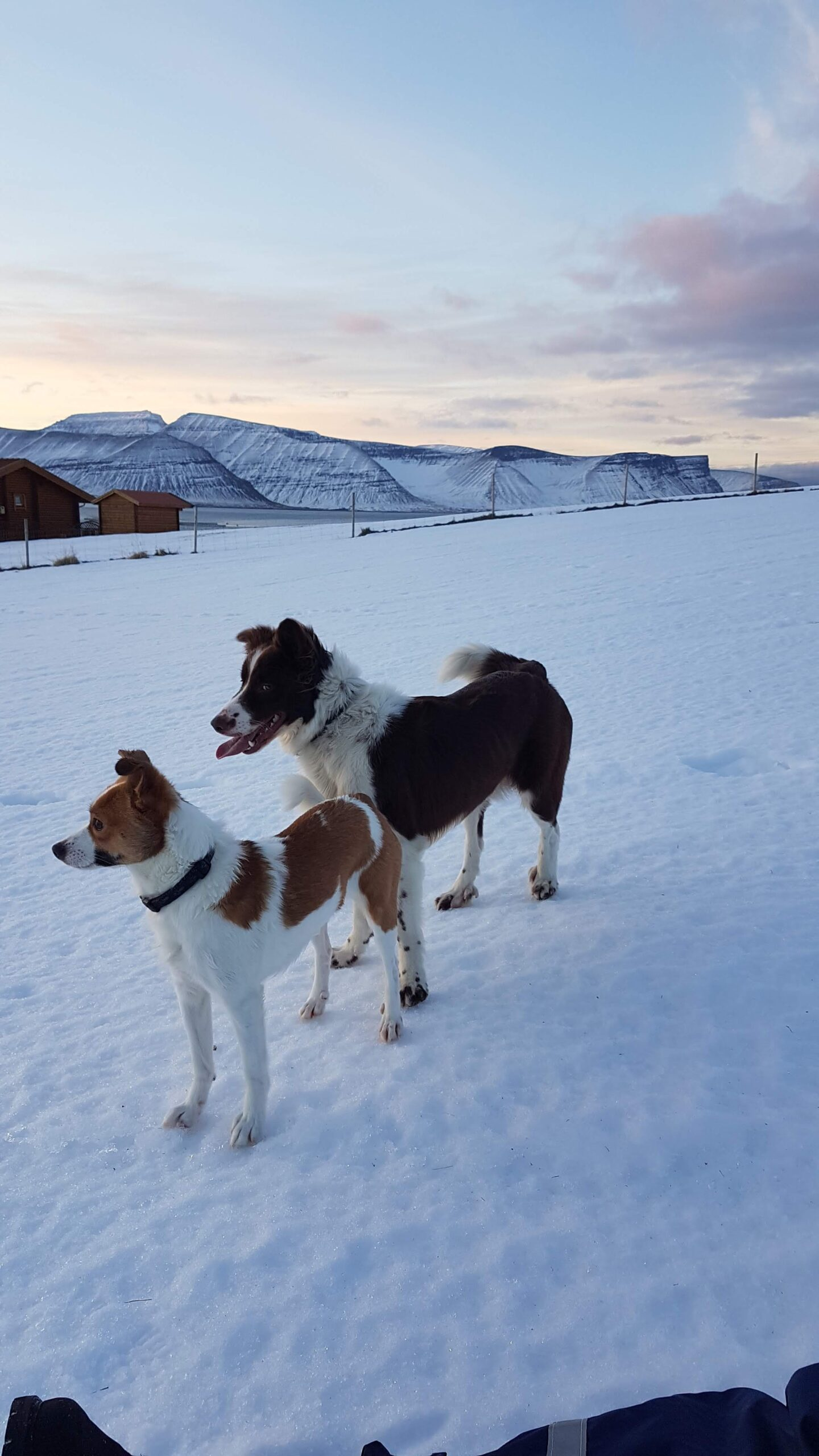 Our dogs - Our farm at winter